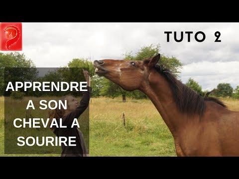 TUTO 2  –  Apprendre a son cheval a sourire